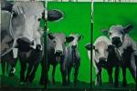 encore des vaches !